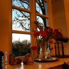 Foto zu Altes Jagdhaus: Unser Sonnenplatz