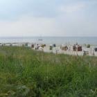 Foto zu Blauer Seestern: