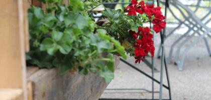 Fotoalbum: Romanicum's Terrasse