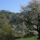 Foto zu Fuchsturm Berggaststätte: