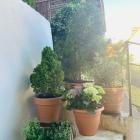 Foto zu Zum Grünen Baum: