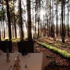 Foto zu Forellenhof Rössle: Unser Tisch mit Hintergrund, Forellenhof Rössle, 08.12.18