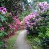 Wanderimpression Rhododendren-Park bei der kleinen Bastei