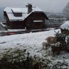 Foto zu Renchtalhütte: Renchtalhütte im Winter mit Streichelzoo