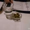 Oliven vornweg