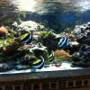 Aquarium in der Lobby