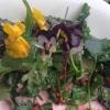 Stiefmütterchen-Blütenmeer im Salat