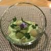 Dessert: Erbsensorbet mit Thaibasilikum