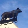 Bild von Ochsen am Markt