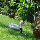 Foto zu Kreilings Sommergarten:
