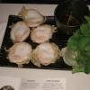 Banh Kh Ot - Kokos-Reispfannkuchen mit Garnelen 6,90€