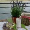 Wuderbarer Blick über den Rhein