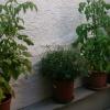 Grünzeug an der Wand