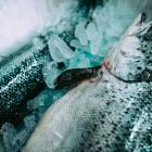 Foto zu Fischwerk: