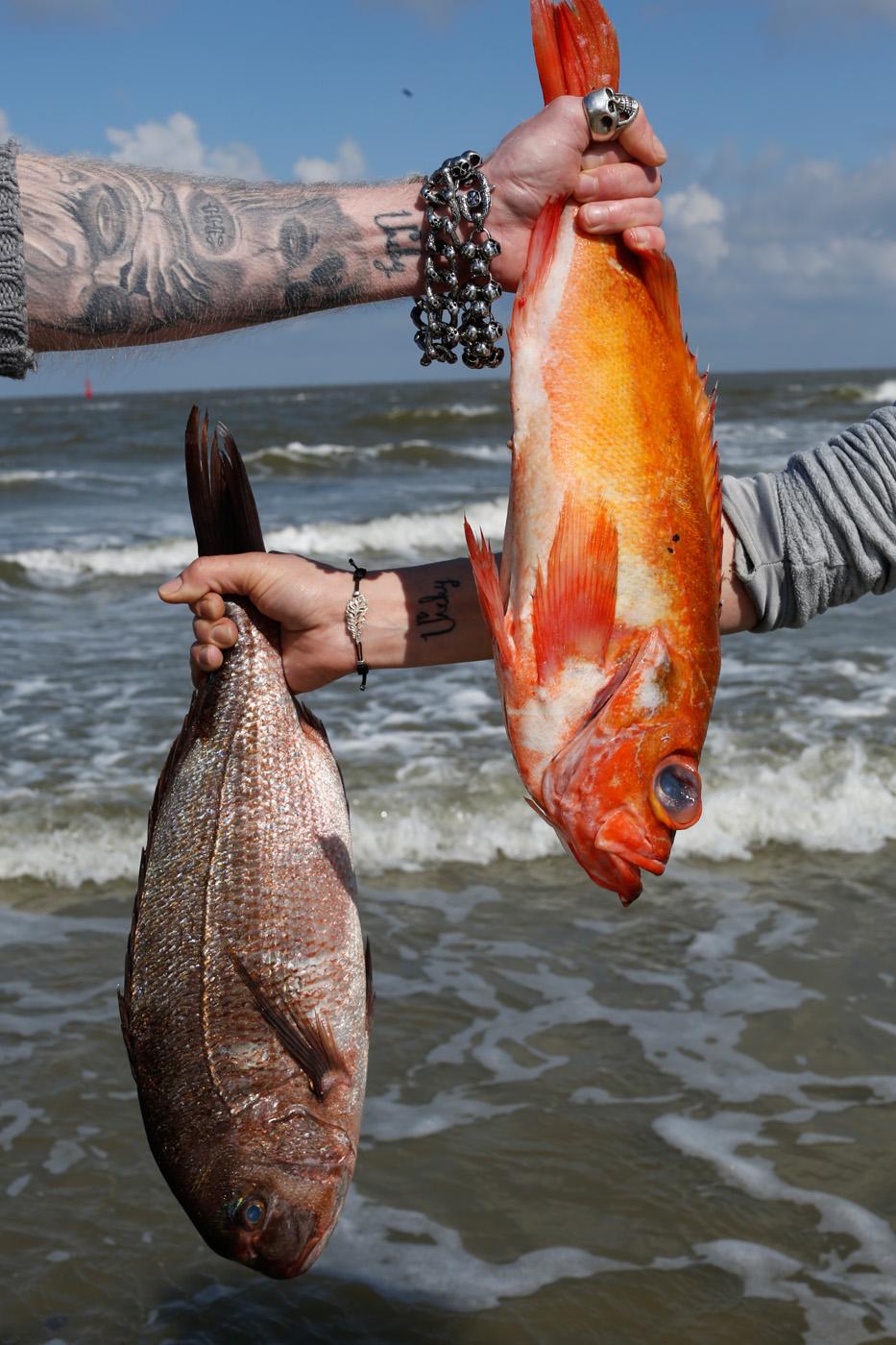 Bild zur Nachricht von Fischwerk