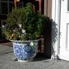 Grünpflanze am Eingang