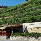 Foto zu Goldene Traube: Biergarten oder eher: Weingarten
