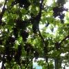 Wein in der Orangerie