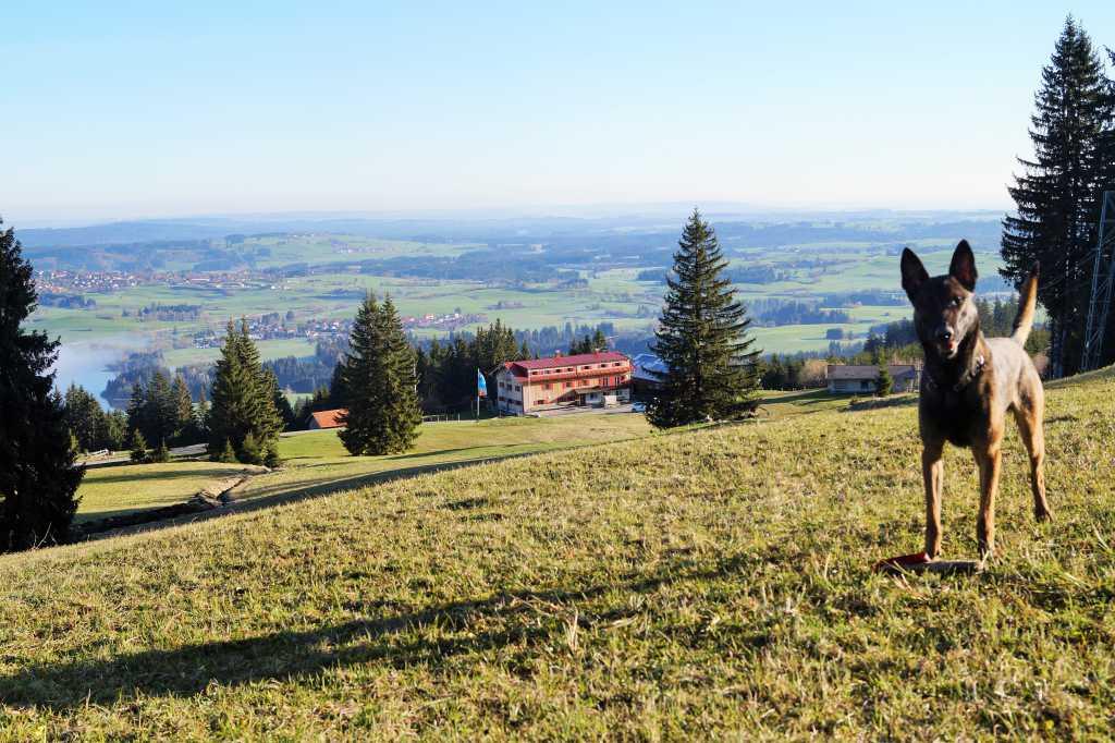 Buronhutte Berggasthof Ausflugsziel Gaststatte In 87497 Wertach