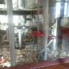 Neu bei GastroGuide: Gasthaus Kirchmühle