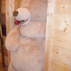 Foto zu Die Bärenstub im Hotel Klosterschenke: Einer der größten