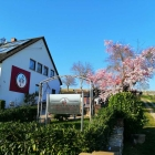 Foto zu Gutsausschank & Vinothek im Weingut Martin: