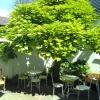 Neu bei GastroGuide: SILO - Unverpackt Laden & Café