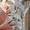 Bild von Tante Emma's Feine Küche