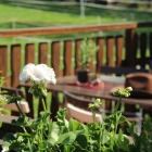 Foto zu Gaststätte ZUM REITERHOF: Terrasse