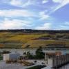 Blick zum Niederwalddenkmal und die Weinberge