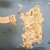 Wand-Land-Karte