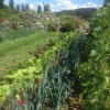 Gemüsebeet mit Kräuterspirale
