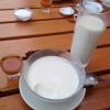 Dickmilch noch ohne Sanddorn