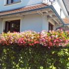 Foto zu Rosengarten · Beim Rinderwirt: Dekoration des Hauses