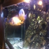 Aquarium bei Spille