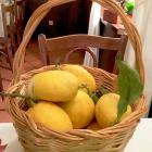 Foto zu La Vecchia Taverna · Altes Rathaus: Zitronenkorb
